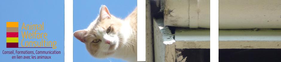 Header CAT