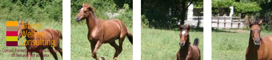 Header chevaux