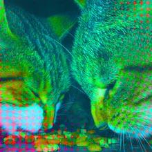 Chats widget