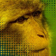 Monkey w3