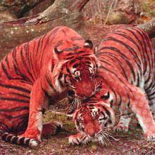 Parc animaliers widget